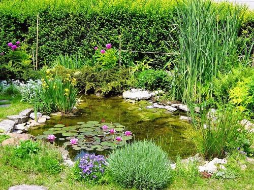 Nain De Jardin Miniature : Bassin Naturel de Jardin