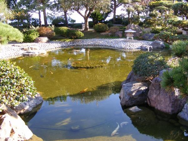 Mini Jardin Aquatique D 39 Int Rieur